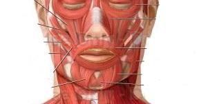 عوارض قابل توجه عفونت های صورت و گردن